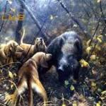 Τα σκυλιά που χτυπιούνται φαίνονται...