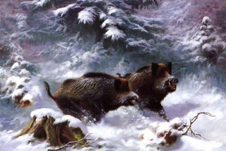 Wildboars in snow small